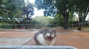 chat bidule - La Gerbe